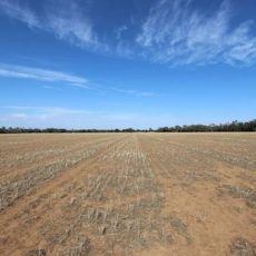 Farmland Investment – Small Farm