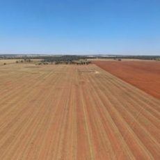 Buy farmland in Australia – Farmland Investment Opportunities for foreigners
