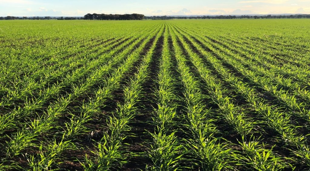 Agriculture Investment - Wheat growing on Inglebrae West