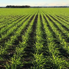 Agriculture investment opportunities