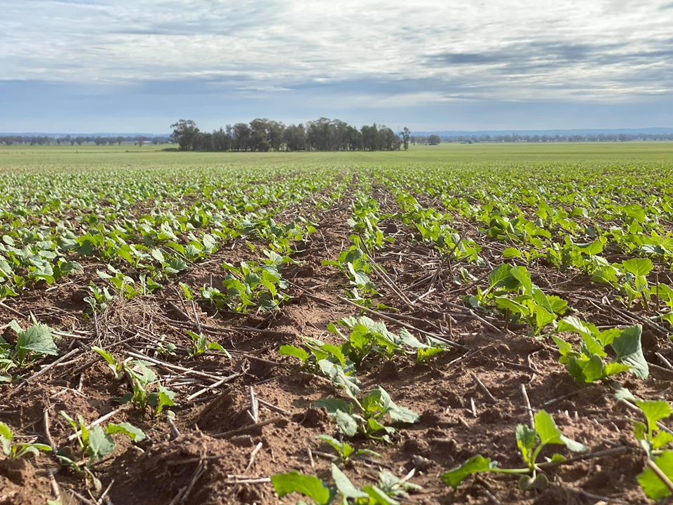 Farmland Crops off to a great start across NSW